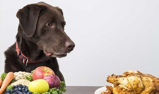 What Foods Provide Your Dog with the Best Nutrition?