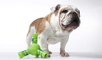 Top 5 Ingenious Pet Gadgets