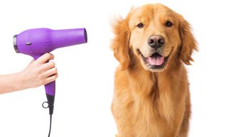 The Beginner's Dog Grooming Guide