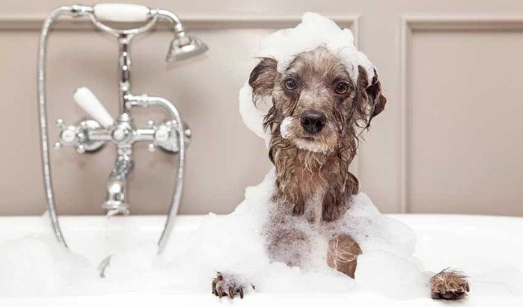 Dog Hygiene Tips in 3 Easy Ways