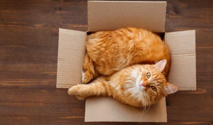 How to Make Moving House Easy with Your Pet