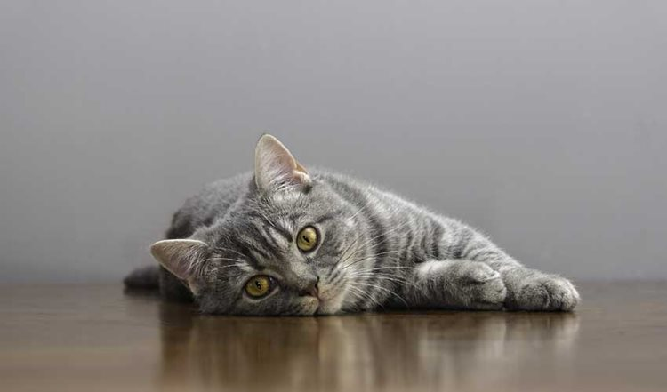 What's Wrong With My Cat? 5 Common Health Problems