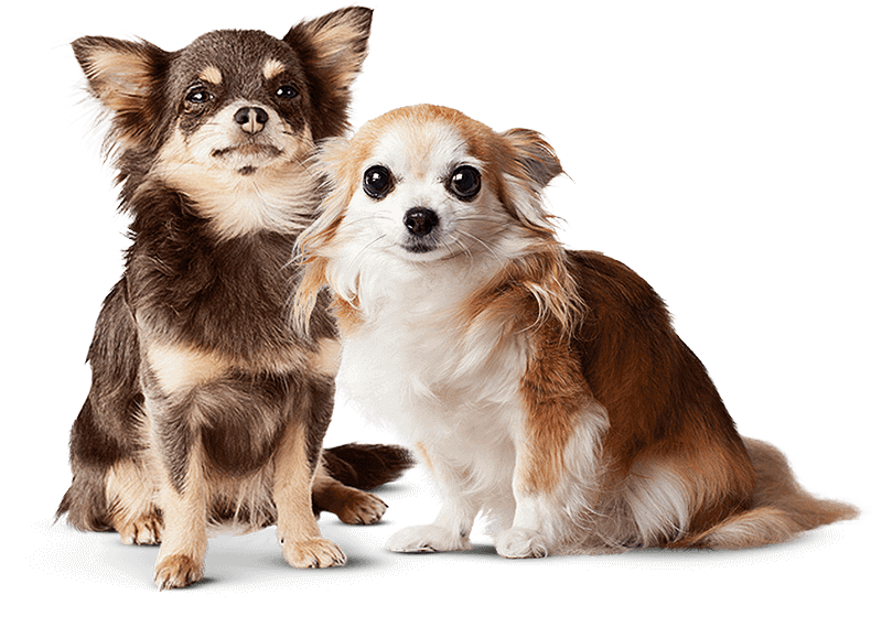 Dog Insurance with Prime Pet Insurance